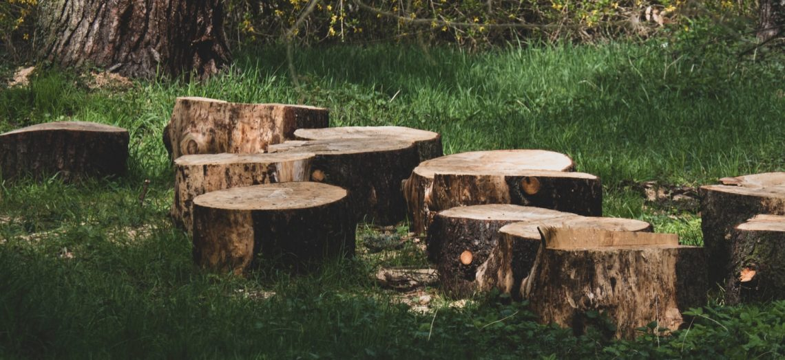 Things to Think About When Considering a Tree Removal Service